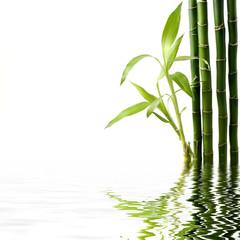 Reflection of Fresh bamboo