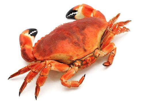 Prepared crab