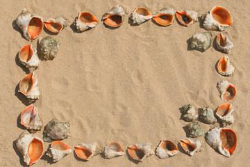 Frame maked of shells.