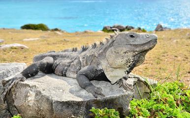 Iguana (Mexico)