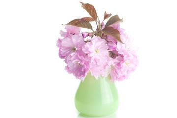 sakura flower in vase isolated on white