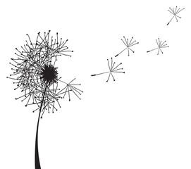 dandelion outline