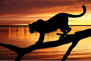 Foto auf Leinwand Panther Silhouette of leopard on branch on sunset background