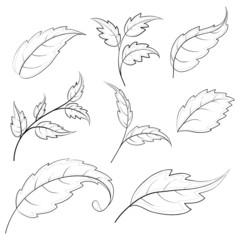Leaves, contours