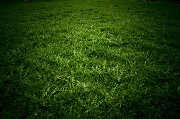 Obraz pole trawy - fototapety do salonu