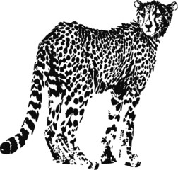 Leopard, big cat shaped from black spots - optical illusion. Illustration on white background.