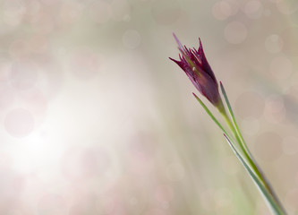 abstract flower background with bokeh