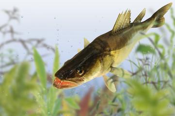 Fische 63