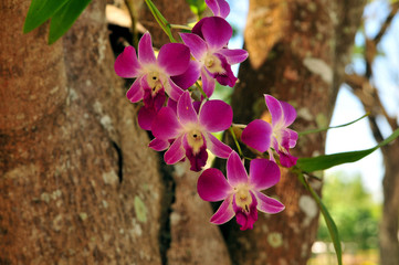 Orchidee am Baum