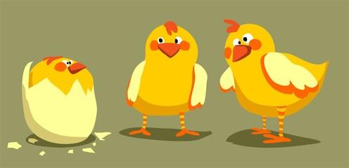 Trois poussins