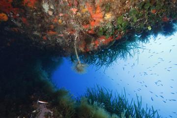 spirografo pantelleria