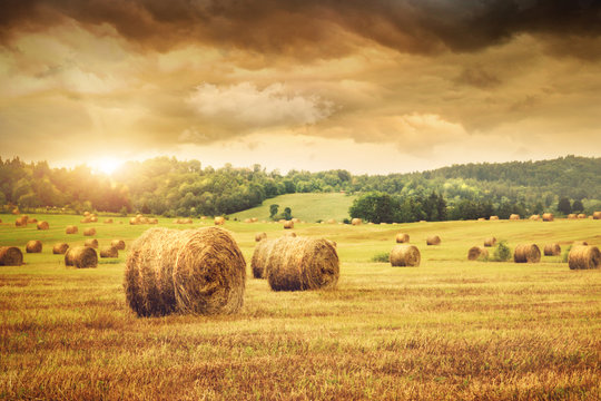 Field of freshly bales of hay with beautiful sunset