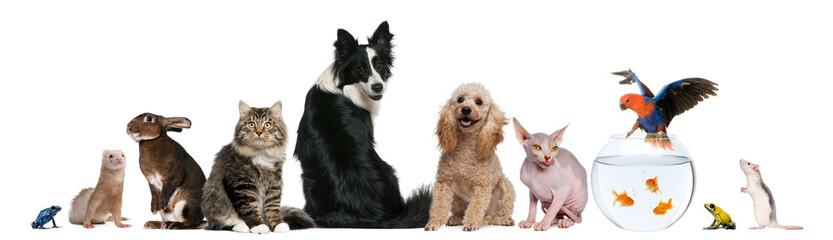 Fototapete - Group of pets sitting in front of white background