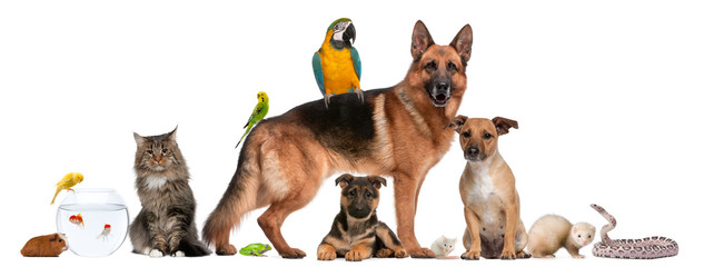 Wall Mural - Group of pets sitting in front of white background
