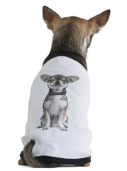 Chihuahua dressed with a t-shirt with a photo of himself,