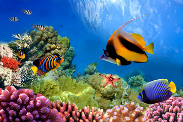 Deurstickers Onder water Marine life on the coral reef