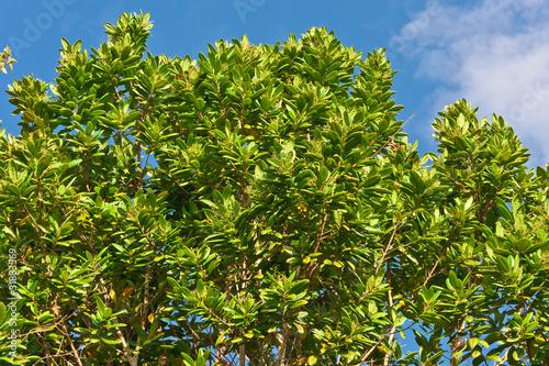 arbre 4 epices