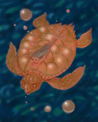 turtle and  little mermaid