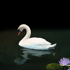 digital painting of a Mute Swan reflected on a dark lake