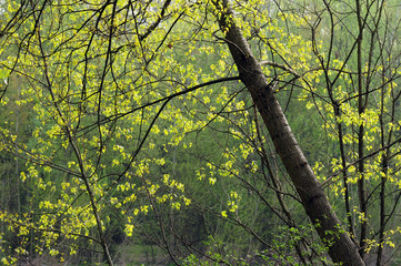 paesaggio alberi 1559