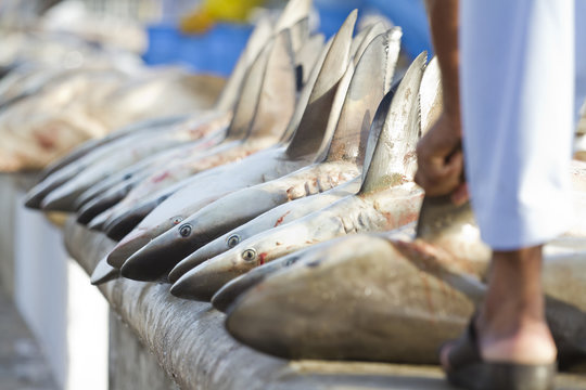 sharks at a fish market, Dubai,United Arab Emirates