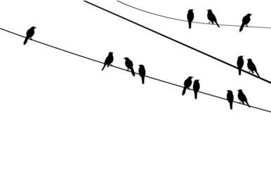 vector birds on wire Fotobehang