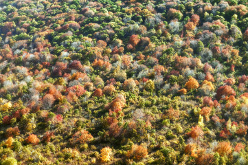 beautiful forest aerial view