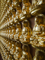 Many statue of gold Buddha Side Perspective