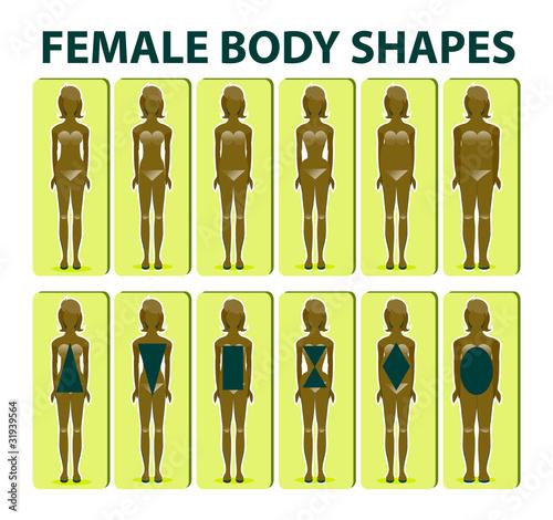 899ec255dba6b Female body shape or figure types. Woman collection. Body propor ...