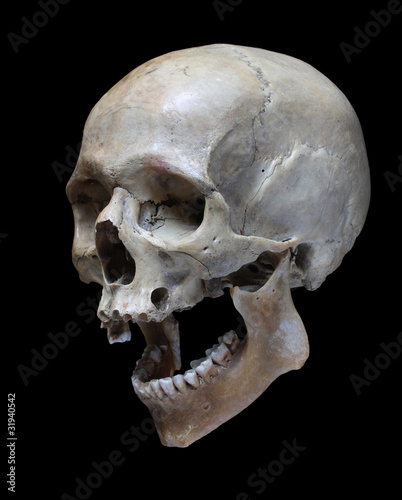 Human Skull Stock Photo And Royalty Free Images On Fotolia