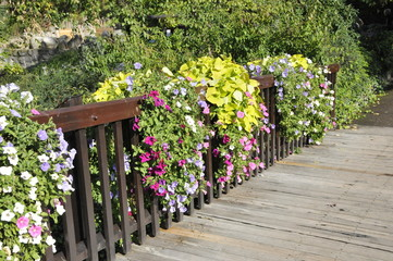Blumen am Geländer