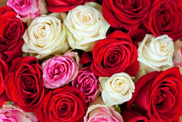 Red, white and pink roses as background