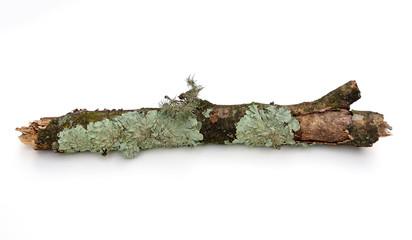 Branch with Lichen