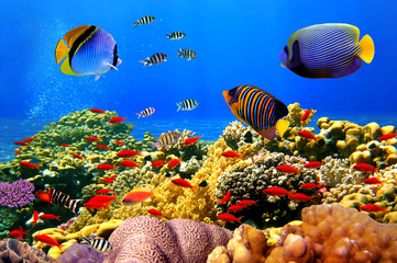Fototapete - Photo of a coral colony on a reef, Egypt