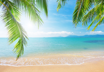 Garden Poster Tropical beach Palm and tropical beach