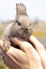 litlle rabbit