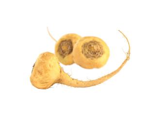 Peruvian Ginseng (Sp. Maca, lat. Lepidium meyenii)