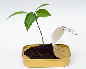 New perspective - seedling from can