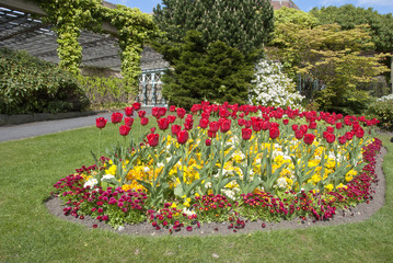 A Flowerbed of Tulips Bell Daisies and Wallflowers