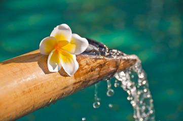 Fontaine bambou et fleur de frangipanier