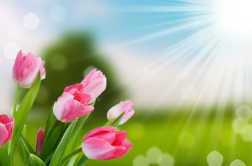 flower and nature spring bokeh background