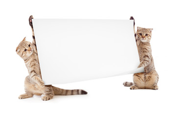 Papier Peint - two kittens isolated with placard or banner
