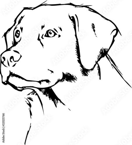 Dog Face Tattoo Designs