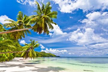 Obraz seychelles plage cocotier - fototapety do salonu