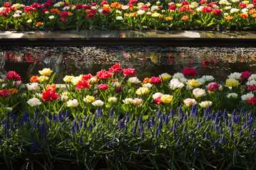Modern pond with colorful tulips