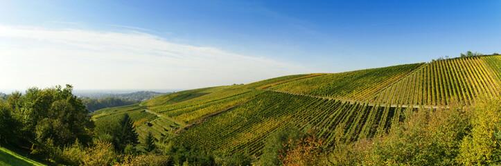 Weinanbau in der Ortenau