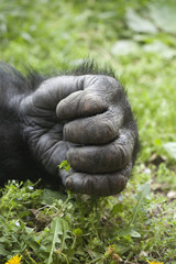 Gorilla Hand _MG_6076