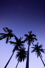 Coconut Trees On The Beach, Southern Thailand