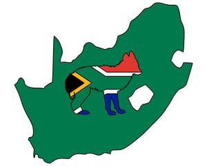Schakal aus Südafrika