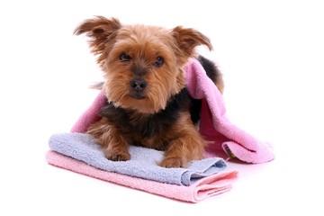 bilder und videos suchen hundefriseur. Black Bedroom Furniture Sets. Home Design Ideas